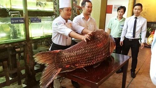Chi gần nửa tỷ mua cá hô 'khủng', nặng 130kg
