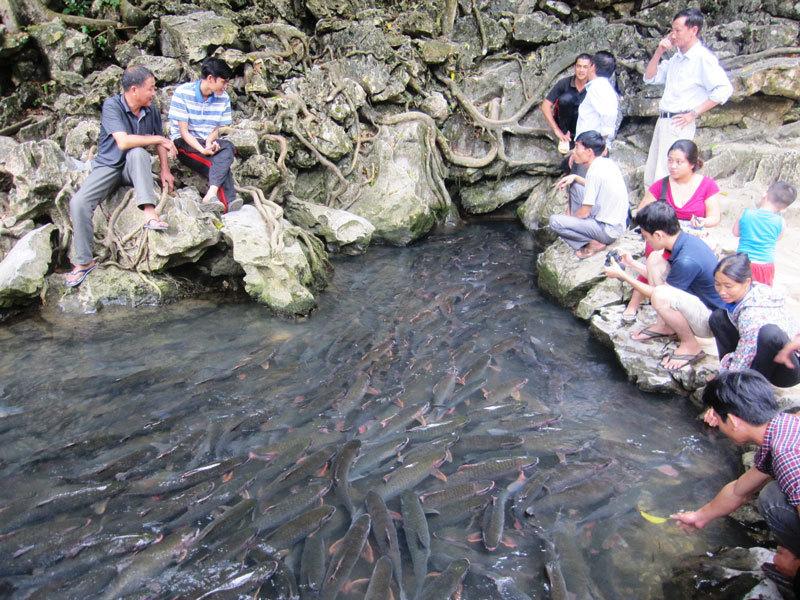 Những chuyện ly kỳ ở suối 'cá thần' xứ Thanh