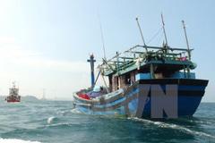 Đang điều tra vụ tàu cá Bình Định bị đâm chìm