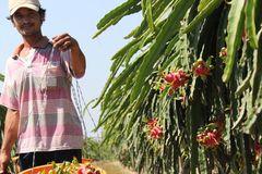 Thu mua nông sản trái phép: Trục xuất 8 thương lái Trung Quốc