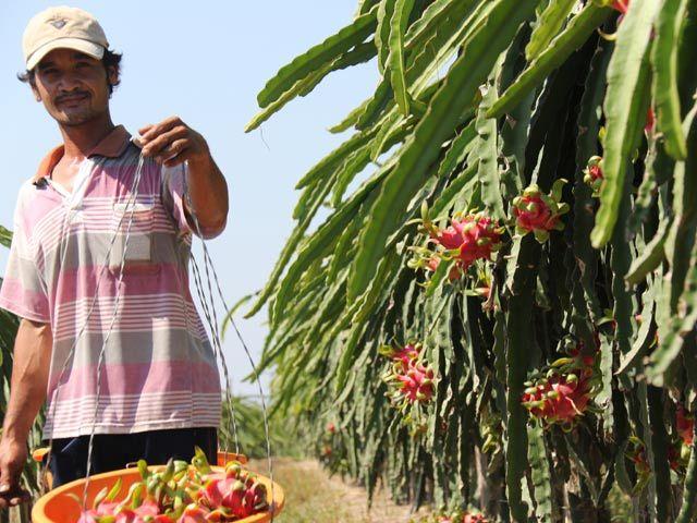 thương lái Trung Quốc, trục xuất thương lái Trung Quốc, thu mua nông sản, thị trường nông sản