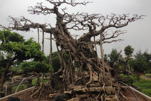 Mê mẩn vườn cây cảnh triệu đô đẹp nhất Hà thành