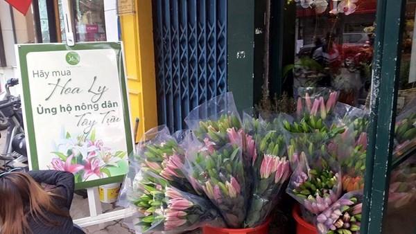 Hoa ly bất ngờ nở trước Tết, người dân méo mặt 'thanh lý'