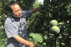 Siêu tỷ phú nông dân