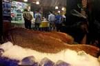 Khánh Hòa: Bắt được cá Mú 160 kg