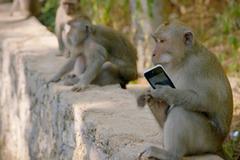 Làm gì nếu bị con khỉ giật mất smartphone?