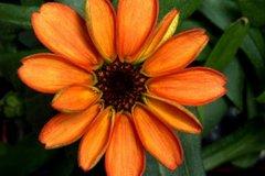 Bông hoa đầu tiên nở ngoài trái đất