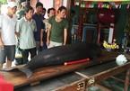 Cá voi 3 tấn mắc cạn ở biển VN được giải cứu