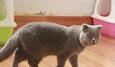 Công tử Hà thành mê mèo khổng lồ, 60 triệu không bán