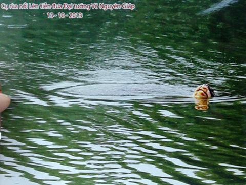 cụ Rùa, nổi, Hồ Gươm, Đại Lễ, dư luận