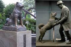Những con vật đi vào huyền thoại