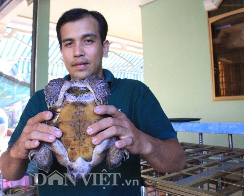 Rùa siêu dị trả giá 1 tỷ đồng không bán