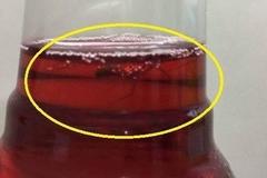 Thực hư 2 con nhện chui tọt vào chai Sting của Pepsi?