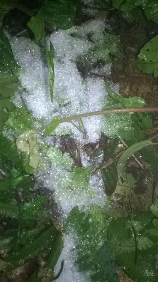 Băng tuyết phủ trắng khu vực vườn quốc gia Ba Vì. (Ảnh: N.Chính)