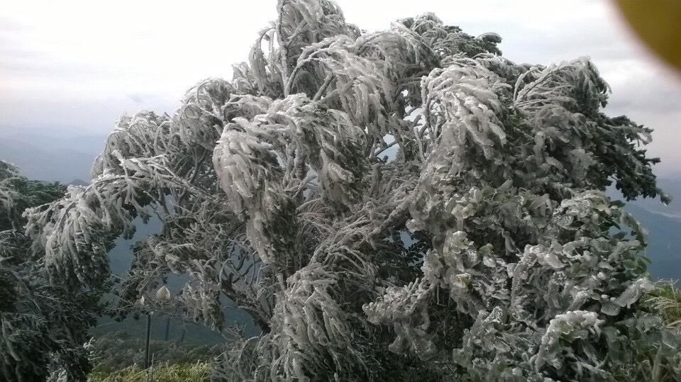 Hình ảnh băng đè trĩu cây đẹp ngỡ ngàng trên Yên Tử