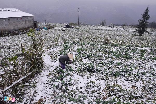 mưa tuyết, tuyết rơi 2016, rét đậm rét hại