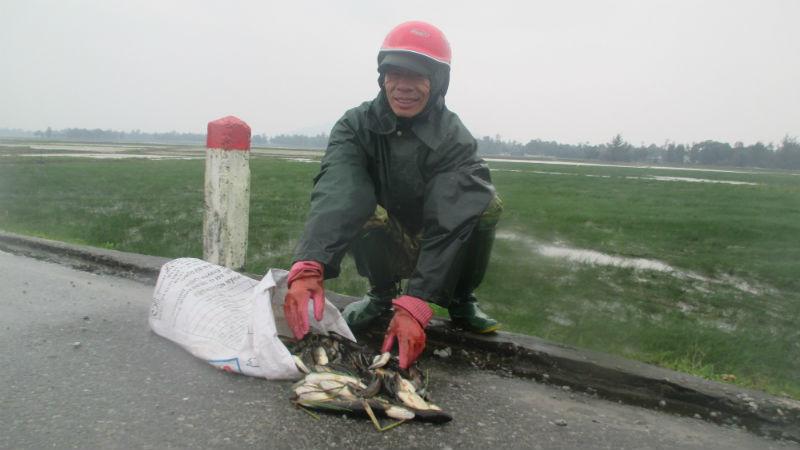 Người dân đổ xô đi vớt cá chết cóng