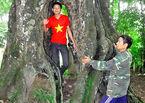 Chuyện lạ ở 'cây thị ăn thề' 700 năm rỗng gốc
