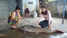 Con cá lăng dài 1,7m bán giá 16 triệu