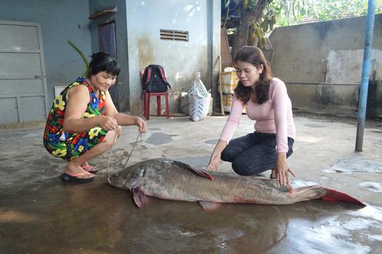 cá khủng, dài 1,7m, bắt được, cửa hàng, 16 triệu, cá-khủng, dài-1,7m, bắt-được, cửa-hàng, 16-triệu
