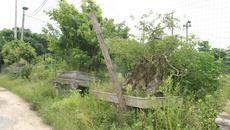 'Đại gia' cây cảnh bán rong vỉa hè kiếm tiền Tết