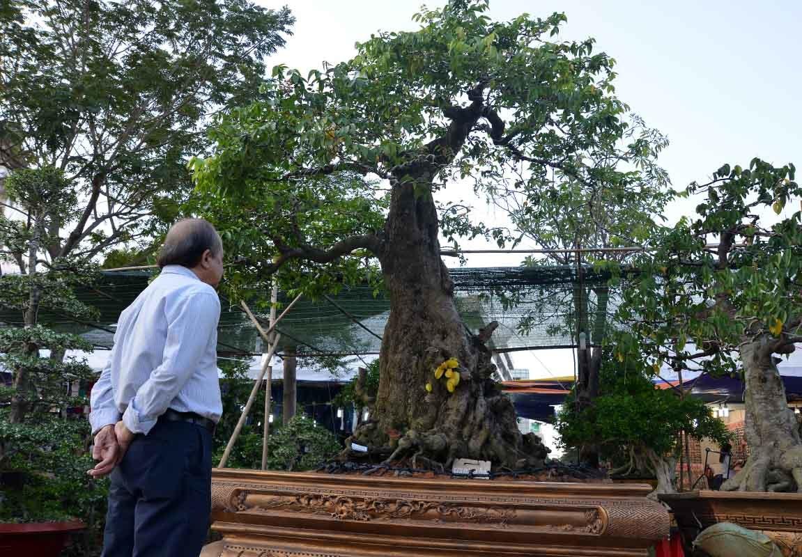 Cây cảnh tiền tỷ đua sắc ở phố nhà giàu Sài Gòn