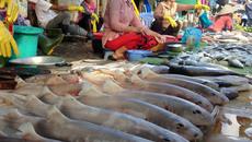 Sắc màu tươi rói chợ cá Dương Đông Phú Quốc