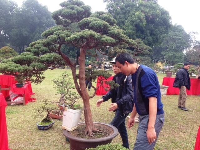 'Siêu cây cảnh' mỗi năm tăng giá nghìn đô
