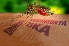 Virus Zika gây teo não nguy hiểm như thế nào?