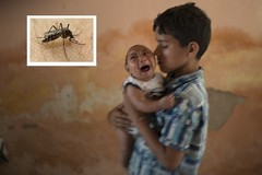Virus Zika và tiết lộ khủng khiếp về muỗi biến đổi gen