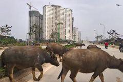 Đằng sau những khu nhà của giới siêu giàu Việt