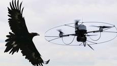 """Video: Cảnh sát Hà Lan huấn luyện đại bàng  """"bắt giữ"""" flycam"""