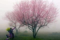 Chơi hoa đào, da hồng hào