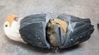 Lô ma túy 5 tỷ giấu trong tượng chim đại bàng