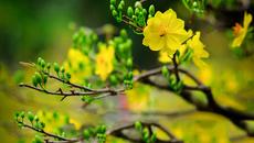 Những loại hoa nên và không nên cắm trên ban thờ ngày Tết