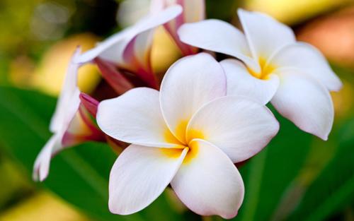 hoa phong thủy