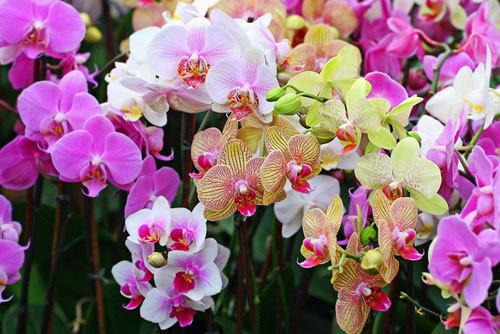chọn hoa hợp phong thủy