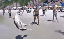 Chú chó chơi bóng bá đạo nhất thế giới