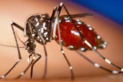 Virus Zika đã lây nhiễm tại 32 quốc gia