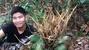 Chuyện lạ: Cả làng đào sâm bán như khoai lang