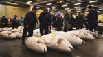 Cá ngừ giá gần 2 triệu đô