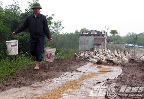 Nhà ông Vươn tính ra thương hiệu 'Vịt biển sạch Đoàn Văn Vươn'