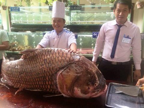 cá khủng, thủy quái,đại gia Lê Ân