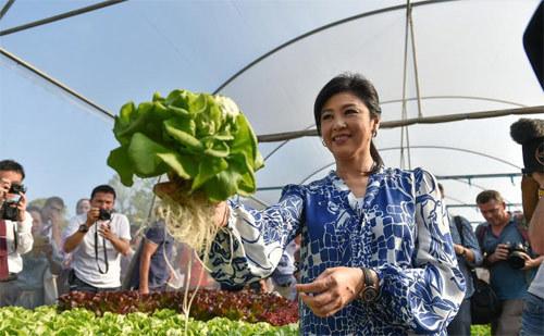 Thái Lan, Yingluck Shinawatra, họp báo, gặp gỡ, phóng viên, rau, khoe, tự trồng, xinh đẹp, thế giới, Vietnamnet