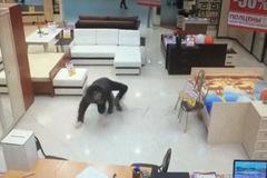 Tên trộm bị nữ nhân viên đè nghẹt thở