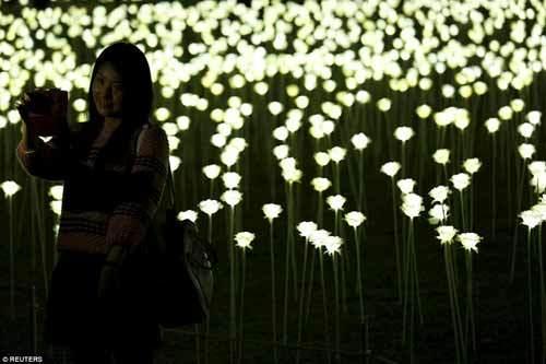 Thắp sáng hàng vạn bông hồng trắng trong ngày tình yêu