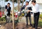 Chủ tịch nước trồng cây, kêu gọi ngăn chặn phá rừng
