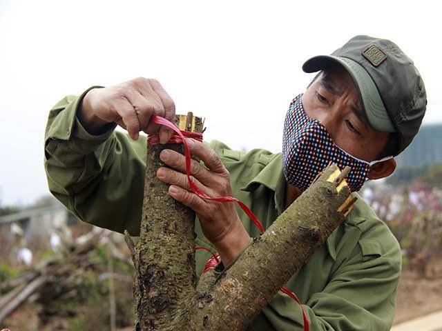 Dân Nhật Tân ngậm ngùi đốt đào tiền triệu