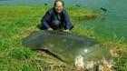 Xác rùa Hồ Gươm được bảo quản như thế nào?