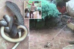 Rợn gáy cảnh rắn độc nuốt chửng đồng loại